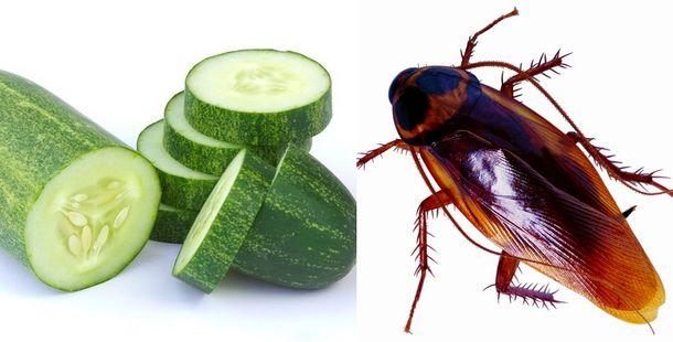 Elimina las cucarachas por completo de tu casa con el uso - Remedios para eliminar cucarachas ...