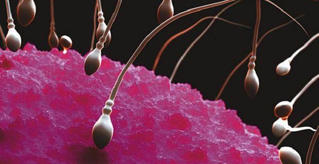 espermas saludables