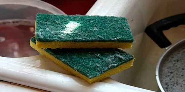 esponjas de fregar