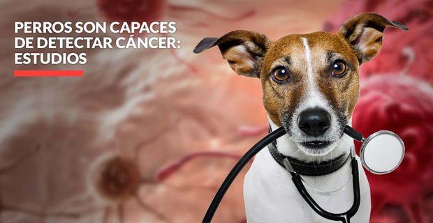 perros y cancer