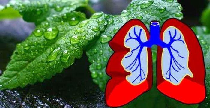 hierba para los pulmones
