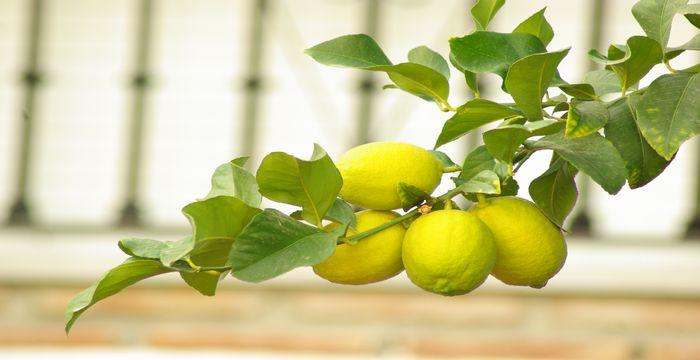 limones y cancer