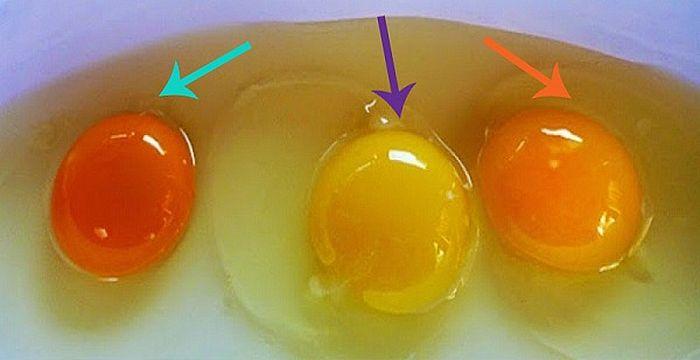 huevos enfermos