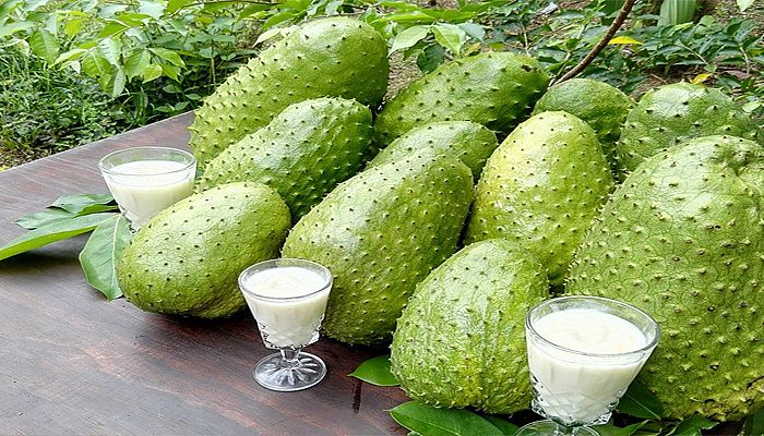Guanabana Fruta | www.pixshark.com - Images Galleries With